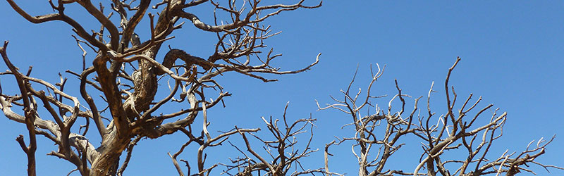 Ecological Value of Dead Trees