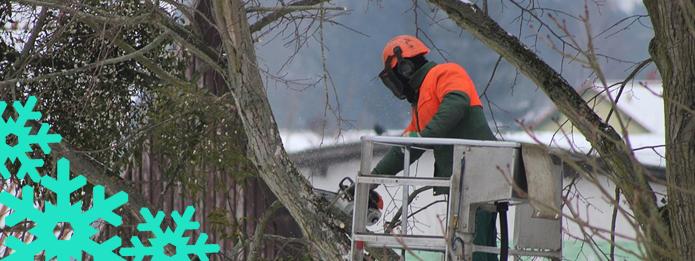 best season for tree pruning