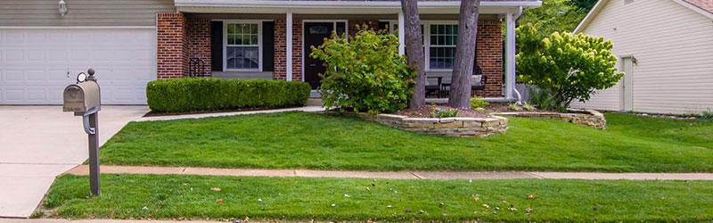 20190327-martins-tree-blog-images-growing-grass-after-stump-grinding_orig