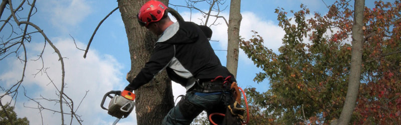 Getting Rid of the Emerald Ash Borer