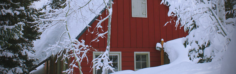 Protecting Trees From Winter Damage