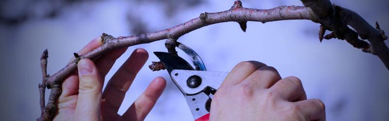 Tree Removal Kitchener