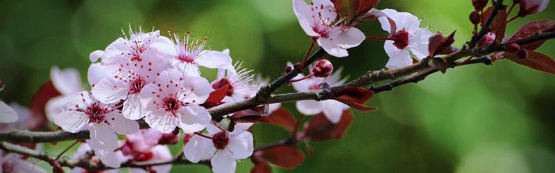 Should Flowering Trees Be Pruned in Spring