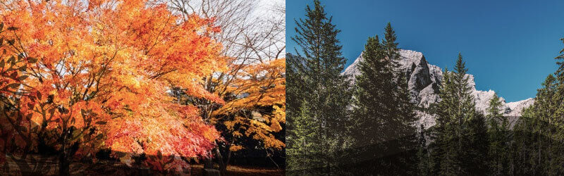 What-Is-the-Difference-Between-Coniferous-and-Deciduous-Trees-opt