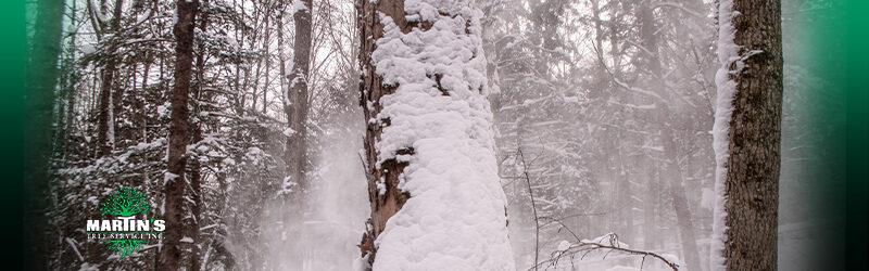 Can Frost Cracks Kill A Tree?