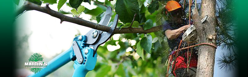 Should You Prune Trees in the Winter?
