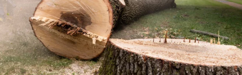 Common Reasons For Removing A Tree