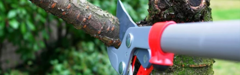Pruning: One of the Worst Maintenance Practices