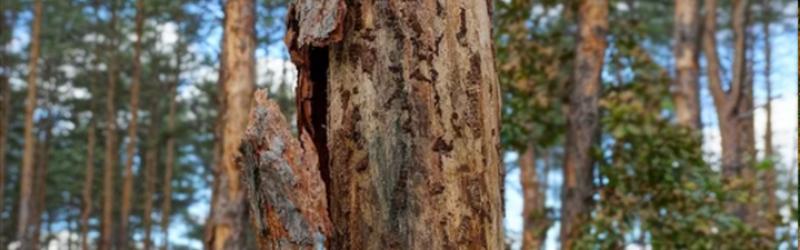 How To Identify Common Tree Diseases In Ontario